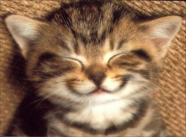 chat-sourire 2
